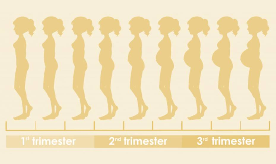 5 body changes that pregnant women will experience in the second trimester2