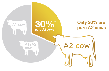 A2-cow-chart-1